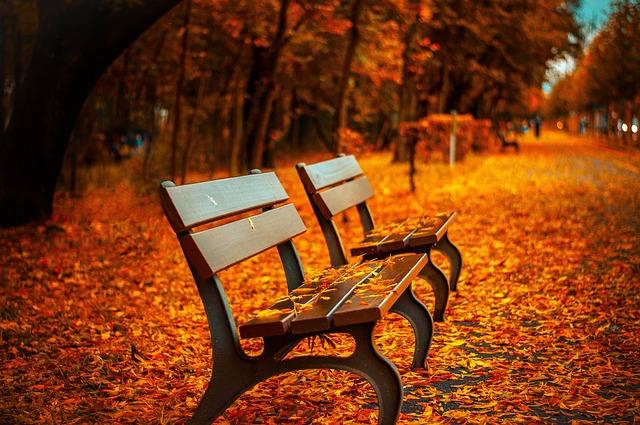 listí na lavičkách